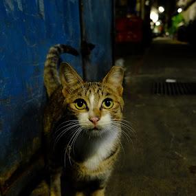 street cat by 冠霖 杜 - Animals - Cats Portraits