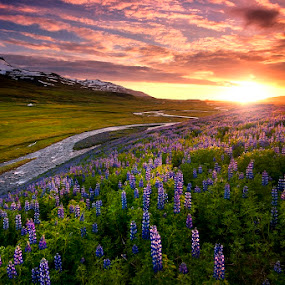 Icelandic meadows by Boris Michaliček - Landscapes Mountains & Hills ( borgarfjordur, iceland, sunset, meadow, flowers, river )