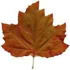 Autumn Nature HD Wallpaper icon