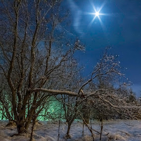 Please call Mulder and Scully!! by Kristvin Guðmundsson - Nature Up Close Trees & Bushes ( canon, fallen tree, moon, iceland, reykjavik, blue, fallen, snow, 60d, canon 60d, trees, pine,  )
