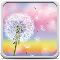 Dandelion Live Wallpaper 3.0