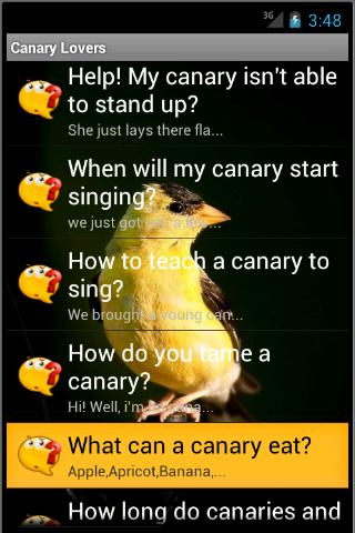 Canary Lovers- screenshot