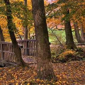 Beautiful colors of autumn by Zeljko Kliska - City,  Street & Park  City Parks ( hdr, park, autumn, forest, zagreb,  )