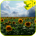 Sunflowers 3D Live Wallpaper icon