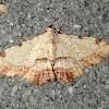 Sandava Moth-Noctuid Moth