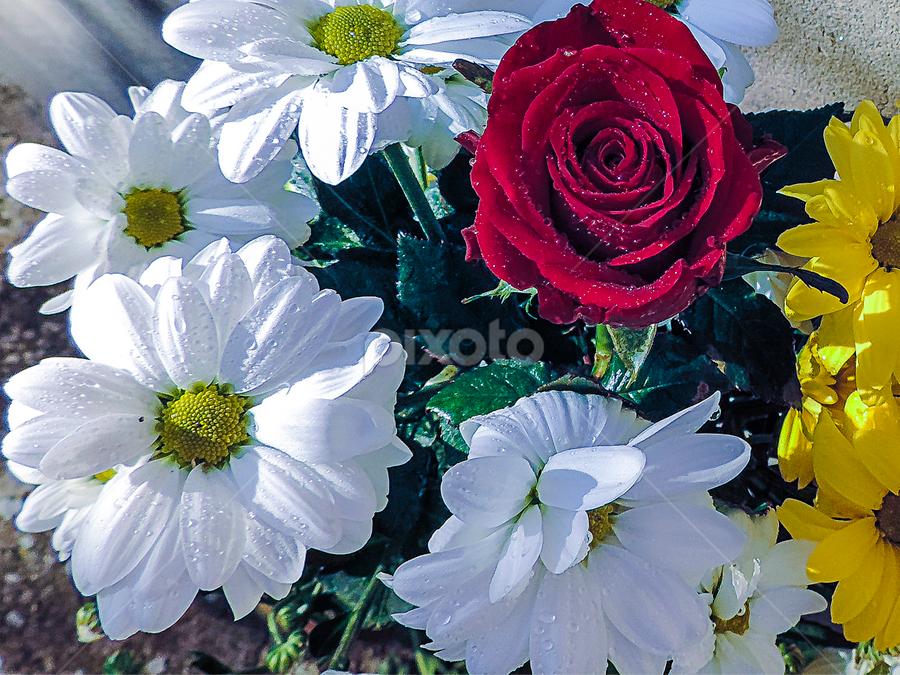 multicolor flowers by LADOCKi Elvira - Flowers Flower Arangements ( nature, flowers,  )