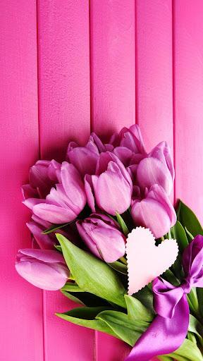粉紅色的鬱金香動態壁紙