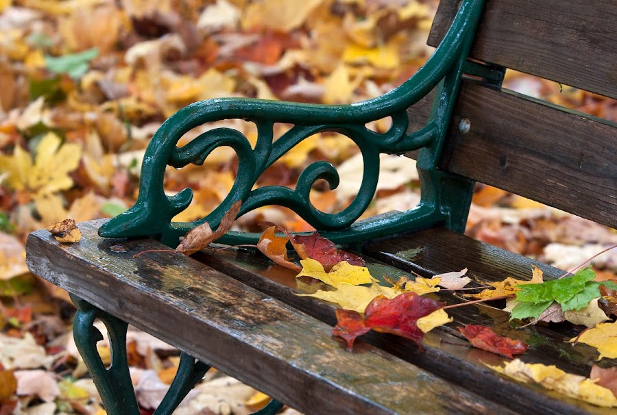 The end of fall. Bar Harbor, Maine. by Gale Perry - City,  Street & Park  City Parks ( colorful leaves, park bench, wet, fall color, public, bench, furniture, object, fall, color, colorful, nature,  )