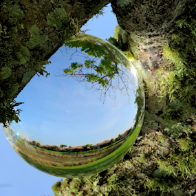 Giant water drop in a tree by Elfie Back - Artistic Objects Glass (  )