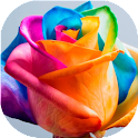 Happy Roses Live Wallpaper icon