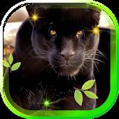 Wild Panther Photo 2015 LWP