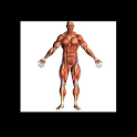 Human Body - Anatomy icon