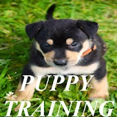 Puppy Training!