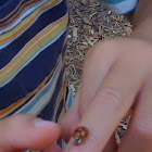 asian beetle- asian ladybug