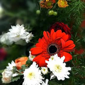 crysanthimum and gerbera by Ganesh LK - Flowers Flower Arangements
