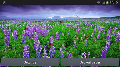 玩個人化App|花海動態壁紙免費|APP試玩