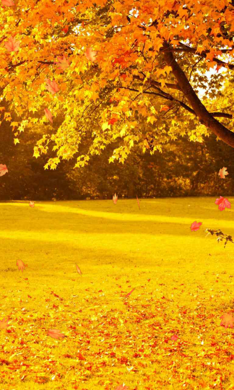 Wallpaper For Pictures Autumn Wallpaper screenshot