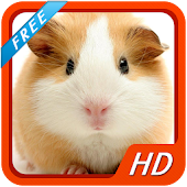 Hamsters HD Wallpapers