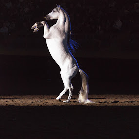 by Hans Watson - Animals Horses