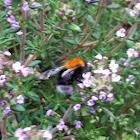 Tree bee