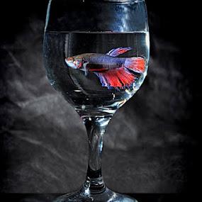 by ERFAN AFIAT SENTOSA - Artistic Objects Still Life