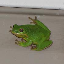 Amphibians of the Southeastern US
