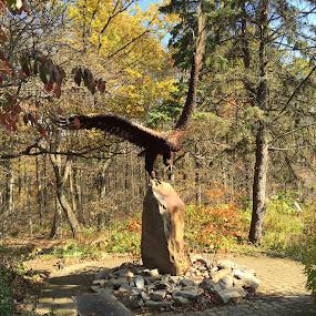Sculptured Hawk by Miguelina Torres - Landscapes Forests
