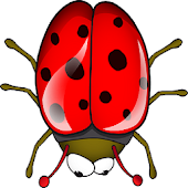 Bugs are Squishy