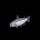 Gaspesie Salmon fishing demo