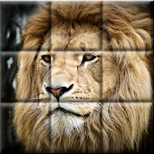 Animal Jigsaw Puzzles Free