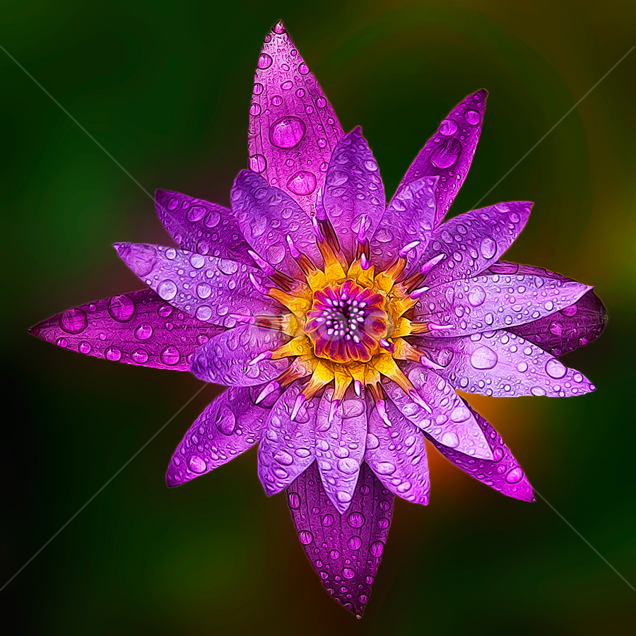 Lotus 19 by TEDDY ZUSMA - Nature Up Close Flowers - 2011-2013