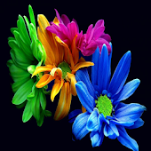 wallpaper flowers for whatsapp
