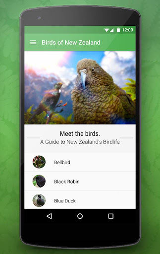 Birdlife of New Zealand