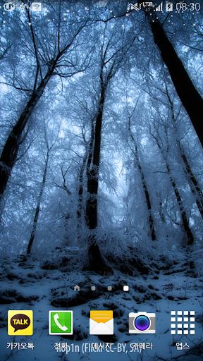 청량한푸른겨울숲배경
