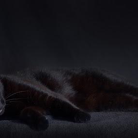 Black cat by Amy Woldrich - Animals - Cats Portraits ( kitten, cat, feline, kitty, portrait, black,  )