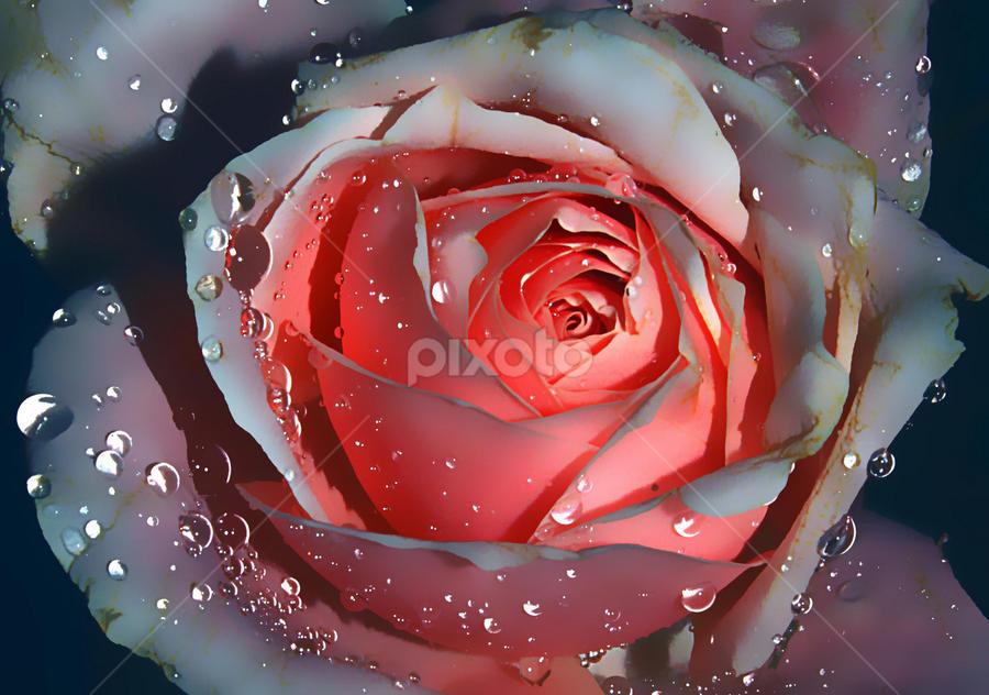 by JOEL Graphuchin - Flowers Single Flower (  )