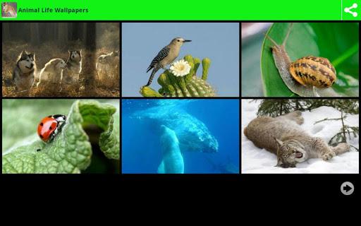 動物的生命壁紙