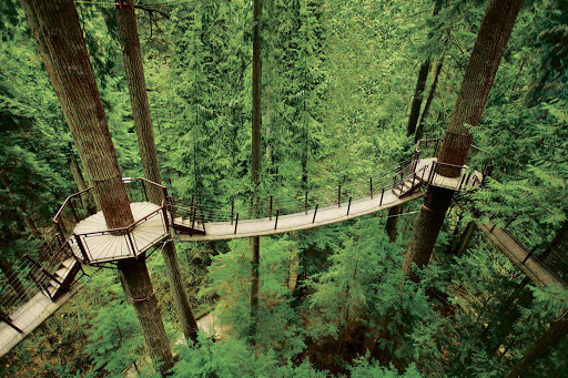 treetop-capilanopark-Vancouver-British-Columbia - Treetops Adventure walkway at Capilano Suspension Bridge Park in Vancouver, British Columbia