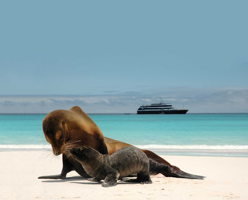 Lindblad-Expeditions-Galapagos-Islander-sea-lions - See a mother sea lion and her pup on the shores of the Galápagos during a Lindblad-National Geographic Expedition.