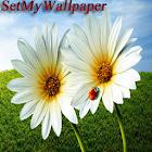 SetMyWallpaper icon