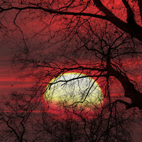 Sunset Closeup by Sheila Marques - Landscapes Sunsets & Sunrises ( #redsun, #sun, #sunset, #sunsetlandscape,  )