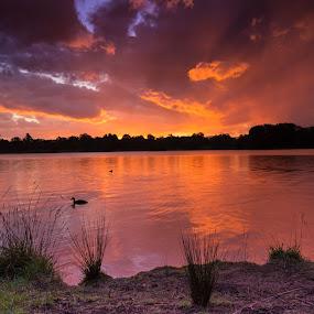 Lake Ginninderra by Peter Hoek - Landscapes Sunsets & Sunrises