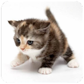 Cats wallpapers +900