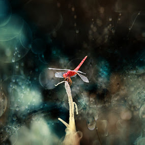 the red... by Casper Prie - Animals Insects & Spiders