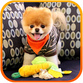 Boo Cute Dog Game