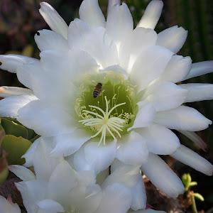Cactus & Bee.jpg