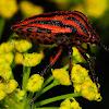 Minstrel Bug