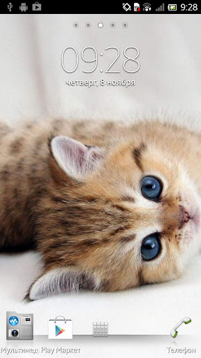 猫游记官网