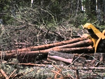 Timberdoodles of Moosehorn