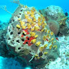 Coral with sponges